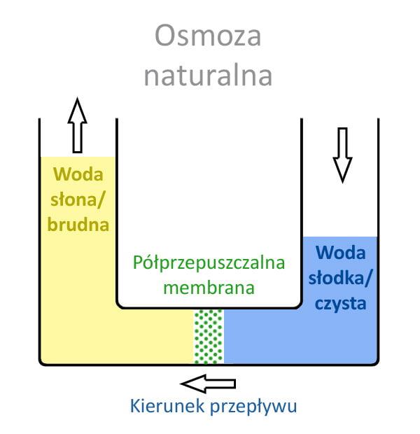proces osmozy w naturze